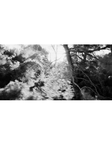 et les pins brodaient le ciel, Bae BIEN-U