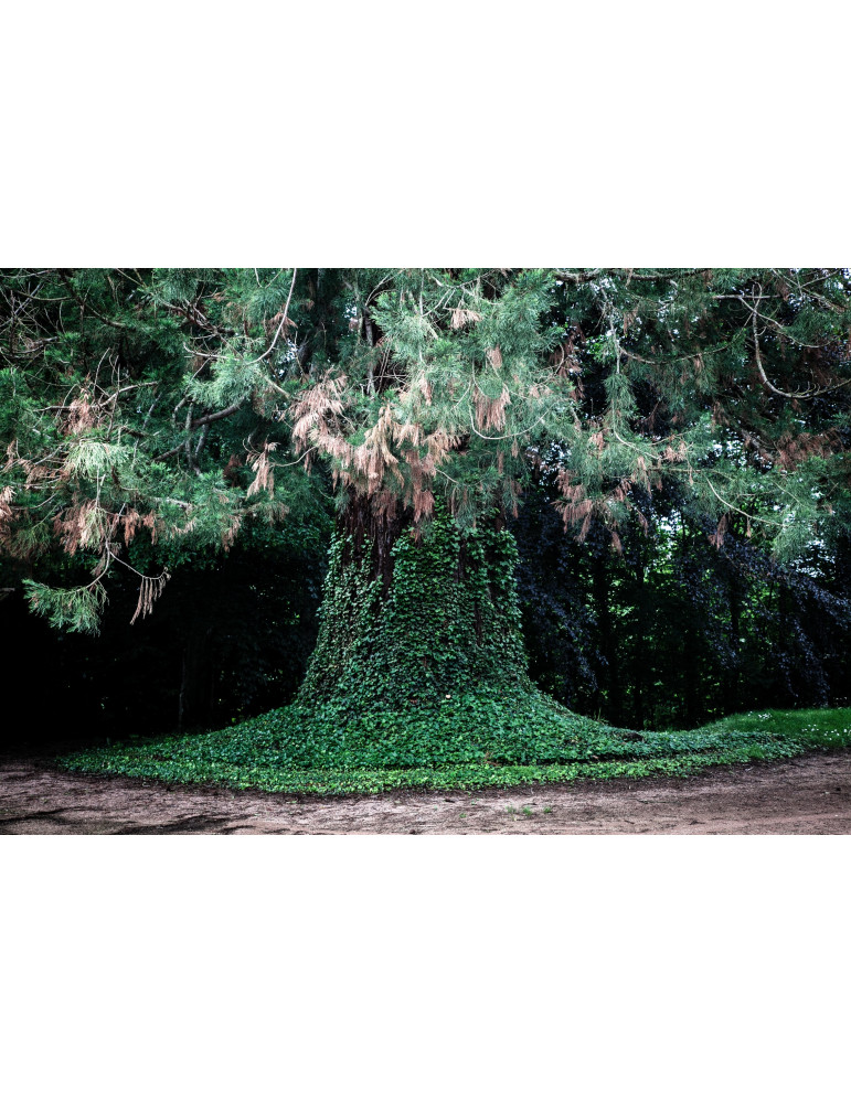 Les Bras du Séquoia
